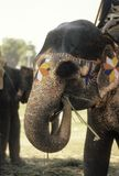 Painted elephant outside temple Stock Photo