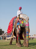 Painted Elephant on Parade Royalty Free Stock Image