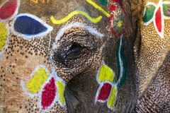 Painted elephants eye Royalty Free Stock Images