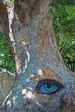 Painted eye. The eye painted on the trunk of old platan tree Royalty Free Stock Photography