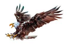 Painted färgade örnfågeln i flykten på en vit bakgrund royaltyfri fotografi