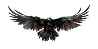 Painted färgade fågelgalanden framme vektor illustrationer
