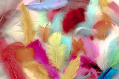 Painted Feathers Royalty Free Stock Photos