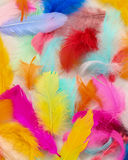 Painted Feathers Stock Image