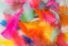 Painted Feathers. Inside the painted feathers with beautiful colors Royalty Free Stock Images