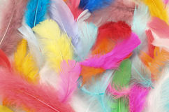Painted Feathers. Inside the painted feathers with beautiful colors Royalty Free Stock Photography