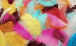 Painted Feathers. Inside the painted feathers with beautiful colors stock photos