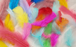 Painted Feathers. Inside the painted feathers with beautiful colors Stock Photo