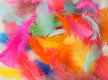 Painted Feathers Stock Photos