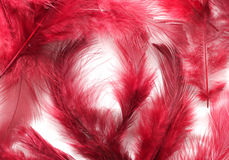 Painted Feathers. Inside the painted feathers with beautiful colors Stock Photography