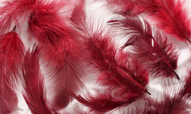 Painted Feathers Royalty Free Stock Photo