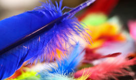 Painted Feathers Royalty Free Stock Image