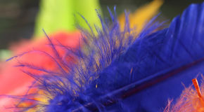 Painted Feathers Royalty Free Stock Images