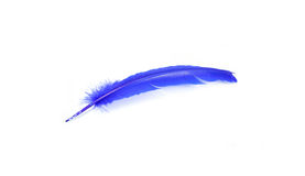 Painted Feathers. Inside the painted feathers with beautiful colors Stock Image