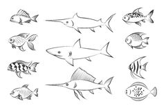 Painted fishes set vector illustration Royalty Free Stock Photo