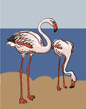 Painted flamingo bird illustration Stock Image