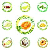 Painted fruit icon vector Royalty Free Stock Photo