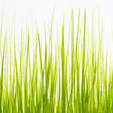 Painted in gouache green grass on a white background Stock Photography