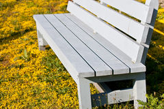 Painted Gray bench surrounded by ground cover. A closeup of a clean painted bench, surrounded by yellow ground cover stock photography
