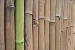 Bamboo fence. Painted green bamboo fence background Stock Images