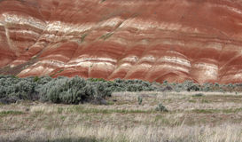 Painted Hills Oregon. A colorful stretch of the Painted Hills in Oregon with beautiful contrasting plant life Stock Photography
