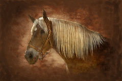 Painted horse Royalty Free Stock Image