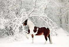 Painted horse in a snowy forest Royalty Free Stock Photography