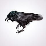 Painted isolated realistic bird of crows royalty free illustration