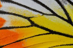 Painted Jezebel Butterfly (Delias hyparete) Royalty Free Stock Photo