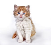 Painted kitten Stock Images