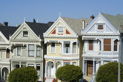 Painted Ladies Stock Photography