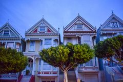 Painted Ladies at Dusk royalty free stock photos