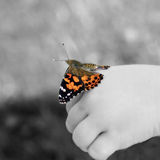 Painted lady butterfly on childs hand Royalty Free Stock Image