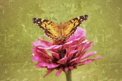 Painted Lady Butterfly spreads its wings in this antiqued photograph. Stock Photo