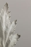 Painted leaf monotone close up Royalty Free Stock Photo