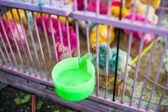 Painted live chickens in a cage for sale at a market in Java, Indonesia Stock Images
