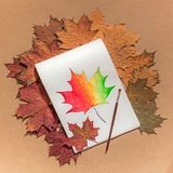 Painted maple leaf on a white sheet. Painted maple leaf in an album on a white sheet, a brush for drawing, dry different-colored leaves around, hobbies drawing royalty free stock photography