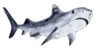 Painted markers shark on a white Stock Photo