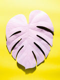 Painted monstera leaf with hard shadow Royalty Free Stock Photo