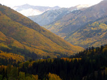 Painted Mountains. Changing Aspen in the Colorado Rocky Mountains during Autumn Royalty Free Stock Image