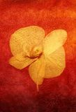 Painted orchid royalty free illustration