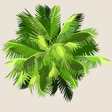 Painted palm leaves gathered. Into ball Royalty Free Stock Image