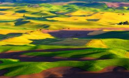 Painted Palouse, Washington State Royalty Free Stock Photo