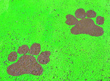 Painted paw prints. On green background Royalty Free Stock Image