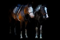PAINTED PONIES FROZEN IN TIME royalty free stock photography
