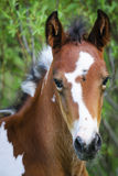 Painted Pony Royalty Free Stock Photo