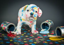 Painted Pooch Royalty Free Stock Photos