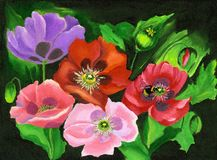 Painted Poppies Royalty Free Stock Photo