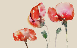 Painted poppies Stock Images