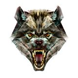 Painted portrait of a colored muzzle of a wolf royalty free illustration